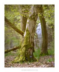 Untitled (Amar Sood) Tags: amarsoodphotocom amarsoodphotography nikon d800 d800e landscape tree nature 45 tamron 7020028