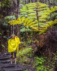 fern_tree (wanderingwithcamera) Tags: fern ferntree volcanonationalpark hawaii kilaueaikiiki rain