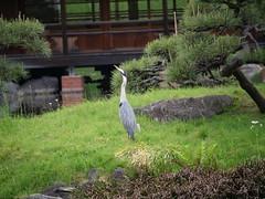 P1004213 (digitalbear) Tags: panasonic lumix gh5 sumida river kiyosumi garden eidai bridge tokyo japan sharehotel lyuro skytree fukagawameshi miyako yakatabune