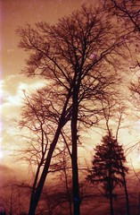 dying tree (the future is analog) Tags: lomo lomography redscale analog film exa 1a tree trees baum bäume