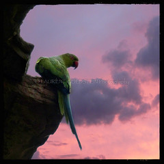 Adding Color To My Sunset Sky (designldg) Tags: light sunset sky india bird animal mystery clouds square photography asia colours peace delhi dream atmosphere parrot timeless contrejour backlighting quietness hauzkhas  indiasong panasonicdmcfz200