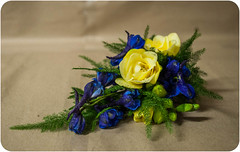 Freesia Buttonhole (Francesca Delanty-Granger Photography) Tags: flowers blue wedding brown flower detail yellow hole cream button gb florist buttonhole delph freesia ivroy florits delphinnium