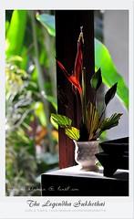 Legendha Sukhothai Hotel review by Maria_048