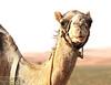 DSC00866 (Instagram x3abr twitter x3abrr) Tags: نار سيارة حيوانات السعودية حطب نيسان صحراء رمل شجر عدسة قرية ثعبان باترول سوني جيب القصيم سحلية كامرة زوم ثعابين الرربيعية الفا٥٧ alrrabieihpuebloqassim arabiasauditaserpienteárbolesdemaderadefuegodelaarenapatrullajeepnissankamrhsonyalpha57animalesserpienteszoomlagartolentedesierto