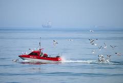 Boat & Gulls 2 (philb1959) Tags: uk sea england seagulls coast boat seaside fishing gulls cleveland transport northeast redcar teeside vigilantphotographersunite