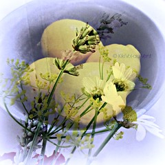 When life hands you lemons.... (Vol-au-Vent) Tags: light wild square with lavender bowl lemons kitchentable happiness table flowersfrommygarden margerites simple flowers kitchen kikivolauvent textures allrightscopyrightreservedbykikivolauvent chrismedinawhatarewords