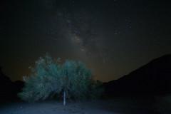 Milky Way Tree (amewzing) Tags: joshuatree milkyway 5d2 distagont2821