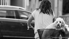 20130804_roadtrip_scanidavie_009 (BramPhotos) Tags: denemark