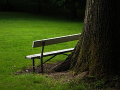 Solitudine (ccrrii) Tags: park ireland dublin parco tree grass bench geotagged loneliness albero prato dublino irlanda irl phoenixpark panchina solitudine leinster whitebench panchinabianca geo:lat=5335185776 geo:lon=630359888