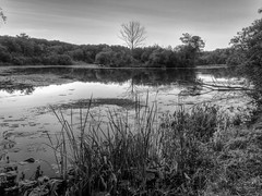 20130823b-08_09_10_tonemapped-Edit.jpg (Wading in the Margins) Tags: park water monochrome flip nik 4x3 photomatrix hdroutput