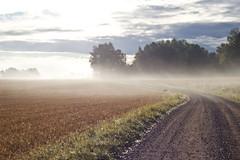 Grusväg (EvasSvammel) Tags: dimma stradasterrata grusväg 365foton