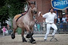 DSC_5519 (Ton van der Weerden) Tags: horses horse de cheval nederlands belges draft chevaux belgisch trait gemert trekpaard trekpaarden fokpaardendag leidavantvenhof