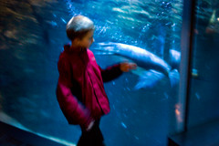 (Chris Moret) Tags: motion blur water animals zoo penguin kid dive streetphotography antwerp antwerpen 2013 sttreet