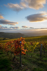 (Daniele Faggioli) Tags: autumn sunset red orange yellow night landscape vineyard nikon tramonto giallo tuscany toscana autunno rosso paesaggio arancione vigneto nipozzano diacceto d3100 pwfall pwpartlycloudy