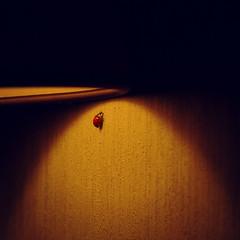 Last ladybird of the year (andzwe) Tags: light shadow copyright netherlands lamp dutch wall focus  nederland spot livingroom climbing ladybird tough survivor muur fz50 sterk lieveheersbeestje spotlicht schemerlamp panasonicdmcfz50 panasoniclumixdmcfz50 andzwe twilightlamp nearcomputer naastcomputer