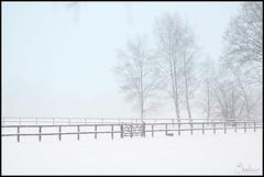 Let it snow more (-Ebelien-) Tags: snow project sneeuw days 365 2012 ebelien