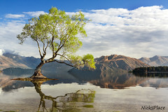The Wanaka Tree (Explore) (Nicks.Place) Tags: longexposure blue newzealand cloud lake plant mountains reflection tree green nature water weather rock canon photography eos photo branch colours photos stock explore getty southisland royaltyfree nicksplace 60d canon60d ringexcellence dblringexcellence wwwnicksplaceconz eltringexcellence