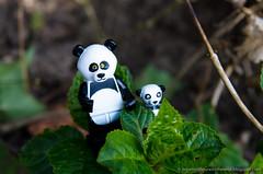 Lego Minifigure Series 12 Wallpaper  Panda Guy (mybestphotonet) Tags: 2 wallpaper 6 3 movie panda lego 10 5 4 7 8 9 11 series 12 wallpapers 13 minifigure guy1
