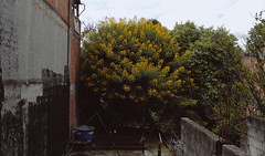 Luz na Escuridão (ARTE - MARK) Tags: yellow sky art drama love dramatic dark city nature natural light day daylight colorful color brick town shanty instagram inspiration indie instragram photography dslr canon nikon tumblr darkness tree trees flowers flower