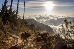 IMG_5953 (Cris_Pliego) Tags: mex querétaro sierra gorda mexico nature bucarelli mountains mision