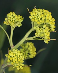D174729A (RobHelfman) Tags: losangeles flowers kennethhahnstaterecreationarea