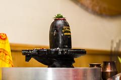 Shree Swaminarayan Mandir - Dharma Bhakti Manor -  Shivratri 2017062 (Dharma Bhakti Manor) Tags: shivratri maha sivaratri shivaratri sivarathri hindu festival lord shiva shiv pooja poojan linga shivling lingam mahadev bilva bael year utsav rudra abhishek