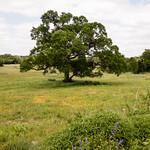 Meadow thumbnail
