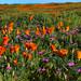 Flower Wonder