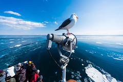 網走の海 05 (tomomega) Tags: 網走 北海道 流氷 海 sea driftice
