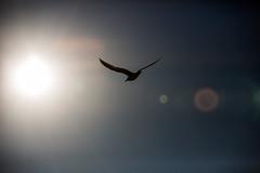 2017 0308 St. Joe Pier-11 (greenshots32) Tags: mckenziehassle michellehassle nature silverbeach snowandice tiscorniabeach tiscorniapier beach bigwaves seagulls sunset winter