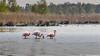 _flamingo_frühling