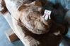 ユキヒョウの彫刻と記念撮影するダンボー (icebluefit) Tags: 大森山動物園 飼育の日 ダンボー