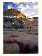 postcard - Yosemite, Mt. Hoffman (Jassy-50) Tags: postcard yosemitenationalpark yosemite nationalpark park unescoworldheritagesite unescoworldheritage unesco worldheritagesite worldheritage whs sunset mountain mt hoffmann penstemon flowers rock