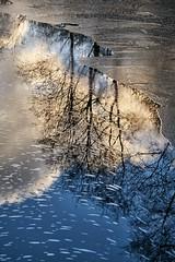 Reflections, Norway (Vest der ute) Tags: xt2 norway rogaland haugesund eivindsvatnet water waterscape landscape trees lake clouds sky mirror ice winter outdoor serene fav25 fav200