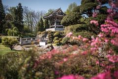 Düsseldorf - EKŌ-House (zenofar) Tags: nikon d810 deutschland germany ekōhouse düsseldorf japan japanisch garten buddhismus tempel asien asiatisch frühling blüten japanese garden buddhism temple asia asian spring blossoms sigma 35mm art
