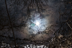 Be Multiplied (A Reflection) (1 of 1) (amndcook) Tags: amandacook michigan nature outdoors pond spiritledphotography earlyspring hike hiking march photo photograph reflection sunlight swamp walk wildlife woods