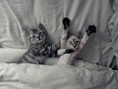 Check the cutest kittens: http://thecaturday.us (TheCaturday) Tags: caturday kittens kitty cat cats kitten cute catsagram catsoftwitter catsofinstagram