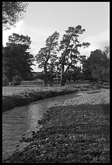 Creek (radspix) Tags: agfa karat 36 50mm solinar f28 ilford pan f plus 50 pmk pyro