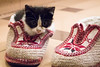365-115 (Letua) Tags: gato mascota bebe cachorro zapatos pantuflas tejido cat pet shoes babycat knitted kitty