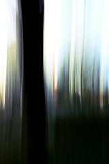 Abstract Series I (Isengardt) Tags: abstract abstrakt tree baum stadt town esslingen badenwürttemberg deutschland germany europe europa farben colors colours lines linien mitzieher ziehen panning dark dunkel schwarz black green farbtupfer olympus omd em1 1250mm blurred blurry blur