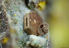 Chayesite (Fran García (Microfran)) Tags: micromount mineral chayesite cancarix