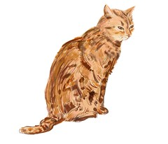 Cat's sketch (Isaszas) Tags: drawing squeeze dessin croquis tekening zeichnung digitalart cat chat katze kater isasza