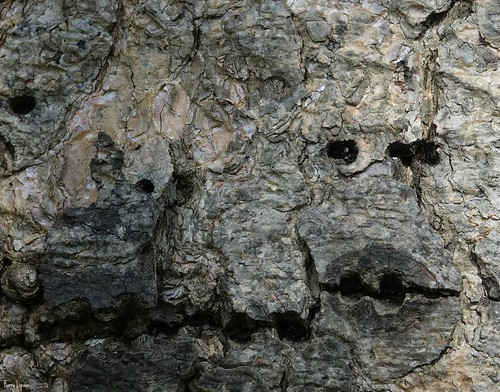 """Faces in the Fur Tree • <a style=""""font-size:0.8em;"""" href=""""http://www.flickr.com/photos/52364684@N03/33551383253/"""" target=""""_blank"""">View on Flickr</a>"""