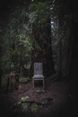 Walk in the park (vancouvertones) Tags: stanleypark vancouver wild tree forest chair canada park pwn pacificnorthwest wilderness britishcolumbia