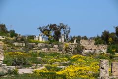 DSC_0229 (mark.greefhorst) Tags: cyprus northerncyprus salamis ancientworld roman