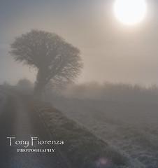 Dans le brouillard (Tony Fiorenza Photography) Tags: fog photgraphy wood