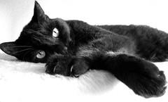 Daydream (frankhurkuck) Tags: katze kater cat schwarze schwarzekatze blackandwhite schwarzweis träumer träumen daydreamer dreaming chat blackcat noir noirchat