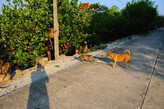 ,, Mama & Shadow Man ,, (Jon in Thailand) Tags: jungle primates monkeys road aggressivealphamalemonkey alphamaleprimate shadow mama dog k9 morningsun trees powerpole monkey primate nikon d300 nikkor 175528 tail littledoglaughedstories