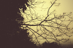 End of a Day (arkamitralahiri) Tags: india travel nature evening darkness twilight dusk bird tree branches beautiful sepia beauty nikon d3100