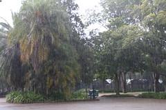 Ibirapuera, SP (quanaval_sp) Tags: ibirapuera parque sãopaulo sp sampa brasil brazil